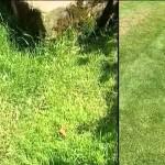 Jak vertikutovat trávník dvakrát ročně