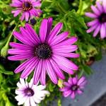 Účinné hnojení zahrady bez chemie
