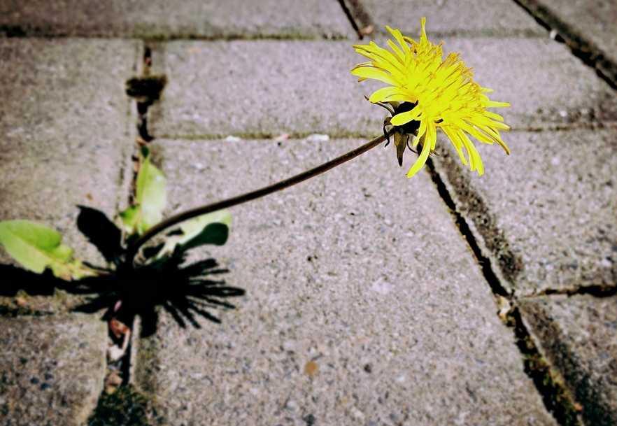 Odstraňování plevelů z dlažby nemusí být zdlouhávé a pracné, pixabay.com
