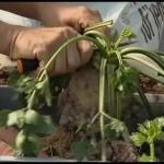 Skladování kořenové zeleniny
