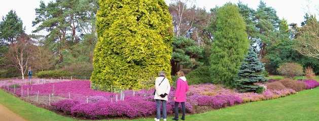 Zahradní vřesoviště může hrát mnoha barvami, geograph.org.uk