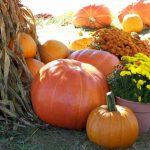 Co ještě stihnout v říjnu na zahradě?