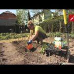 Netradiční způsob sadby a pěstování rajčat