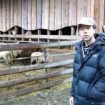 Role dřeva u zemědělských staveb