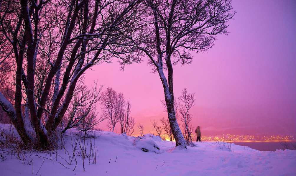 Útoky alergenů nekončí ani v zimě, flickr.com
