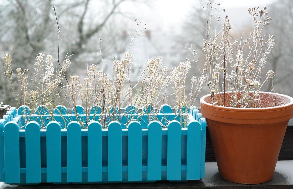 Bez nedostatečné izolace rostliny jedndouše uschnou, pixabay.com