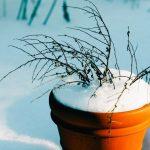 Zazimujte své truhlíky a květináče přímo na terase či balkónu!