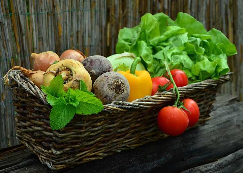Bohaté úrodě musí předcházet správná výsadba, pixabay.com