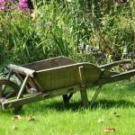 Jak vyhnat klíšťata ze zahrady