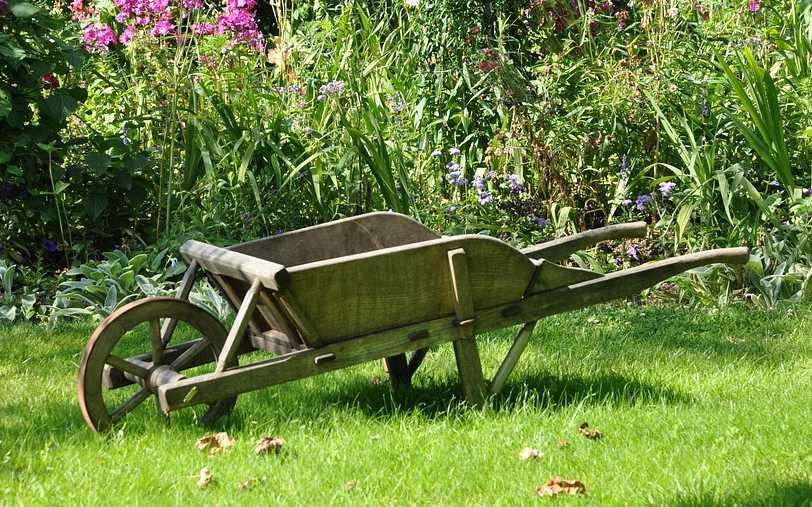 Dlouhá tráva a bujná zeleň je pro klíš´tata přímo rájem, pixabay.com