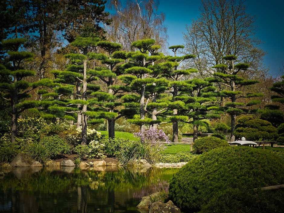 Dominantou japonské zahrady bývají vzrostlé stromy, pixabay.com