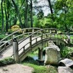 Japonský koutek v zahradě – co by měl mít?