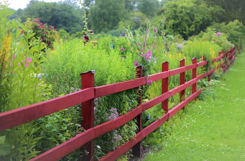 Z dřevoplastu mohou být celé ploty, pixabay.com