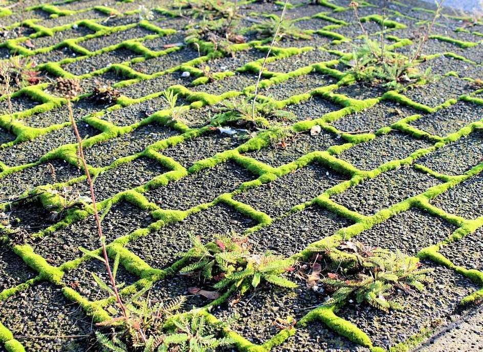 Cílené osázení rostlinami může dát dlažbě novou tvář, pixabay.com