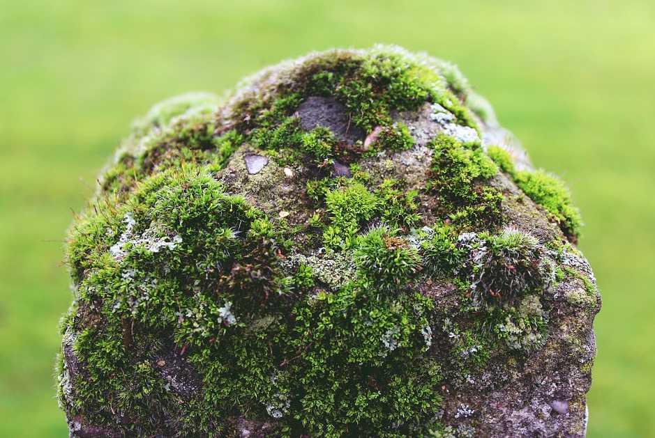 Rostliny vhodné mezi dlažební kostky se hodí i k osázení zídek a kamenů, pixabay.com