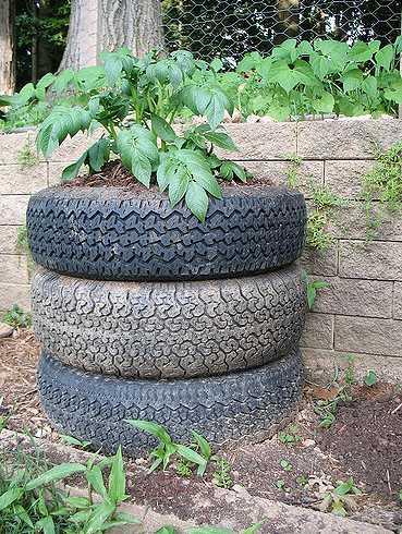 V pneumatikovém záhonku porostou i brambory, flickr.com