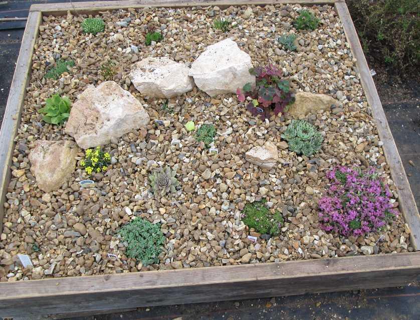 Ve štěrkových zahradách se nejlépe daří suchomillným rostlinám, flickr.com