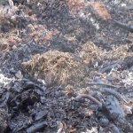 Žárové zahradničení aneb záhon ohněm
