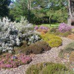 Vytvořte si zahradní vřesoviště, potěší vás až do zimy