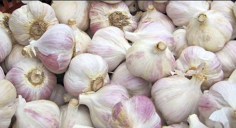 Podzimní výsadba zajistí kvalitní a chutný česnek, pixabay.com
