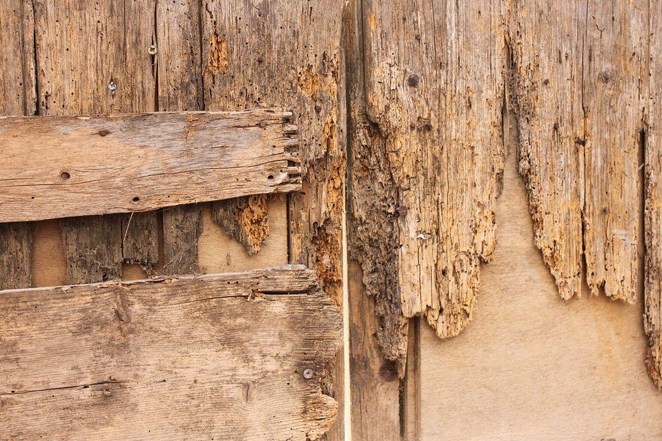 Dřevo napadené červotočem, pixabay.com