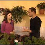 I doma lze pěstovat řadu bylinek
